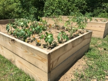 Plantings in beds-640x478